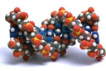 Генетики предупреждают: анализ ДНК не имеет смысла