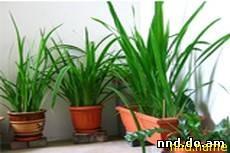 5 комнатных растений, необходимых в каждом доме