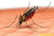 Запах грязных носков победит малярию в Африке