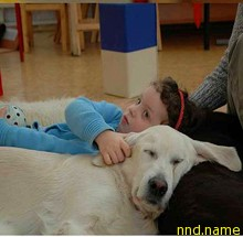 Собаки-помощники инвалидов