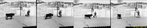 Боевой бык, в мозг которого имплантирован стимосивер, атакует Дельгадо