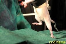 Парализованных крыс научили бегать