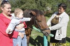 лошадка Маруся уже несколько лет помогает справляться с параличом, ДЦП, нарушениями опорно-двигательного аппарата, нервной системы, сколиозом, сердечно-сосудистыми заболеваниями, гиперактивностью