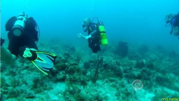 Среди его занятий - подводное плавание с аквалангом