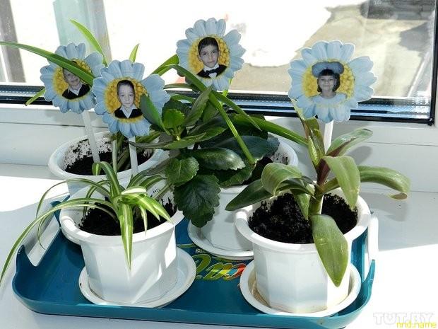 Каждый ребенок следит за своим собственным комнатным растением