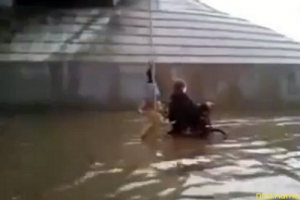 Собака помогла колясочнику выбраться из воды