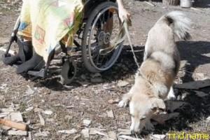 Мужчина, женщина и Рыжий. Хромой пес помогает в беде