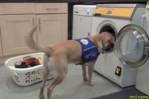 Стиральная машина, которой могут управлять собаки