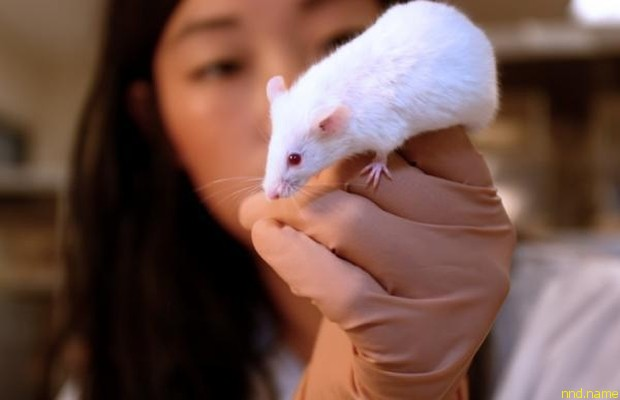 """""""Солнечный витамин"""" избавил мышей от рассеянного склероза"""