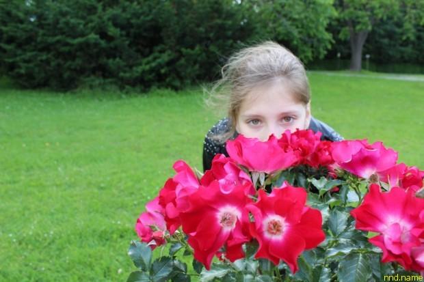Тюльпановое дерево и миллион алых роз