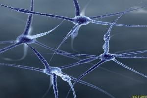 Нервные клетки не способны восстанавливаться