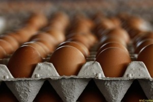 Куриные яйца не повышают уровень холестерина