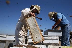 Мед оказался эффективнее антибиотиков