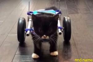 """На 3D-принтере напечатали """"коляску"""" для котенка"""