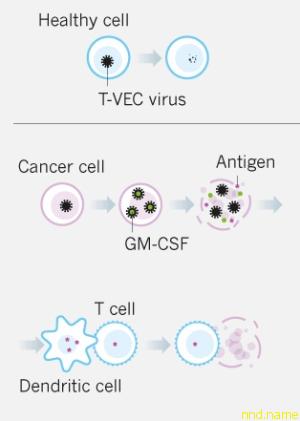 Генетически модифицированный вирус одобрен для лечения рака