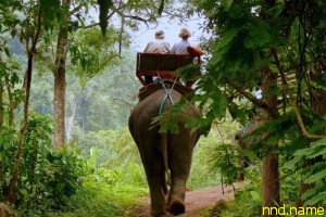 В Таиланде слон убил шотландского туриста