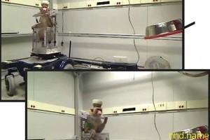 Электроколяска, управляемая силой мысли обезьяны