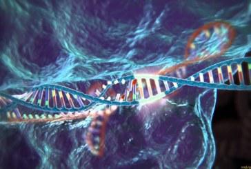 Как человека исправляют с помощью генов бактерий