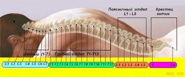 SPINRAZA вводят интратекально путем инъекции вещества на уровне L4-L5 поясничных позвонков