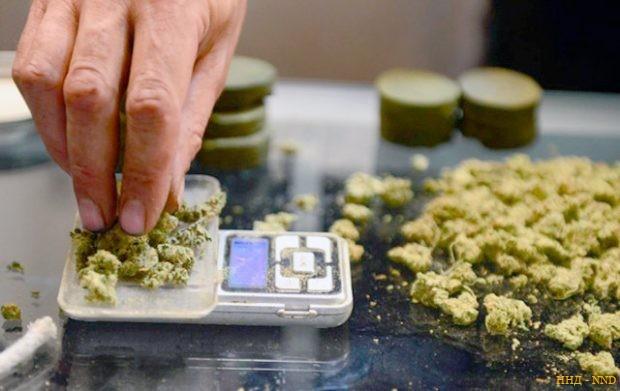 США признали: «трава» убивает раковые клетки