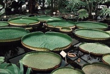 Сенсорный сад для инвалидов в «Аптекарском огороде» МГУ