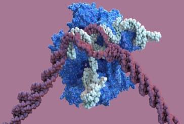 CRISPR стал еще точнее: новая эра генного модифицирования