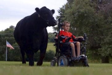 11-летний Алека Готто стал дрессировщиком быков!