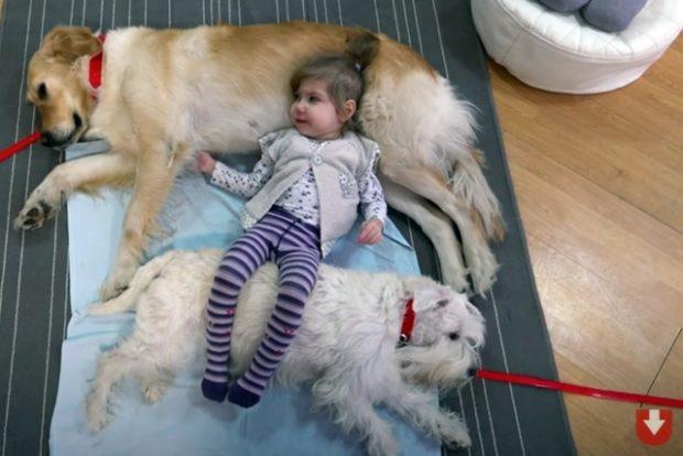 Канистерапия - собаки помогают врачам лечить детей