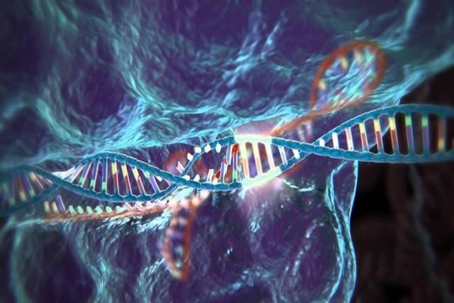 CRISPR излечит больных мышечной дистрофией Дюшенна
