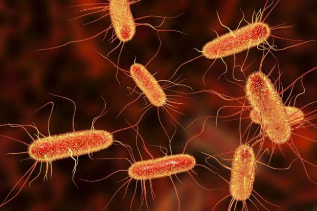 Бактерии кишечника вырабатывают электричество