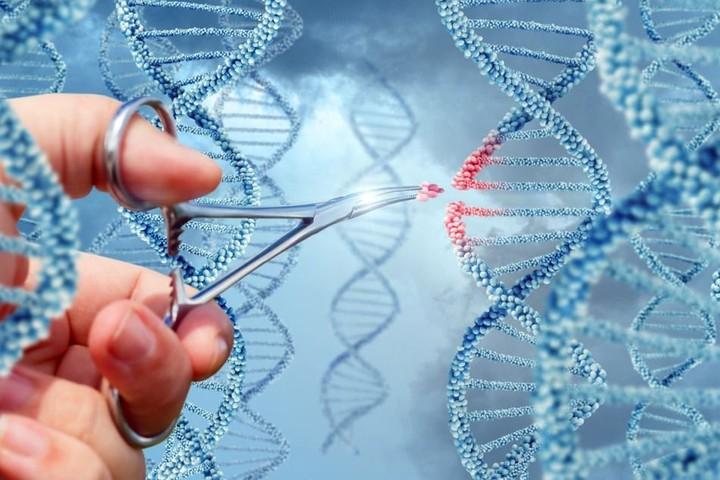 Генетически модифицированные дети родились