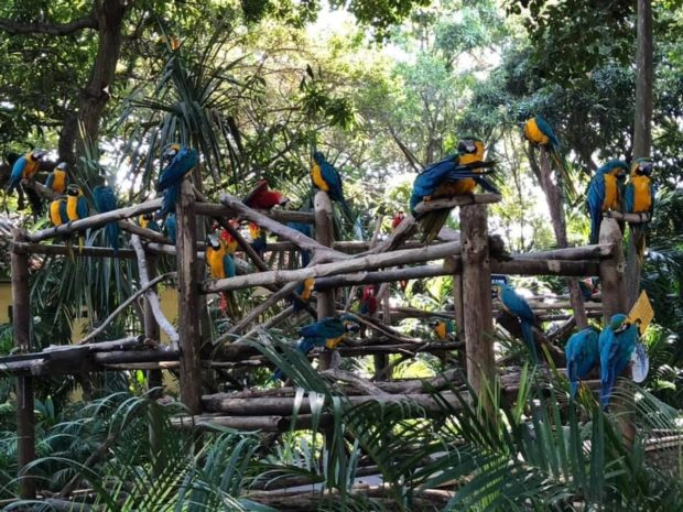 Попугаи на Карибских островах