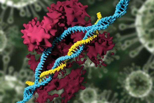 CRISPR замедлил развитие бокового амиотрофического склероза
