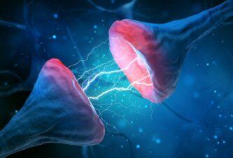 Восстановление связи нервных клеток