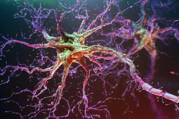 Клетки спинного мозга восстановили внутри живого организма