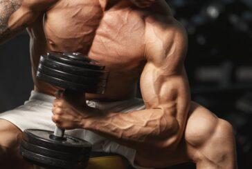 Ингибитор миостатина сохранит кости и мышцы