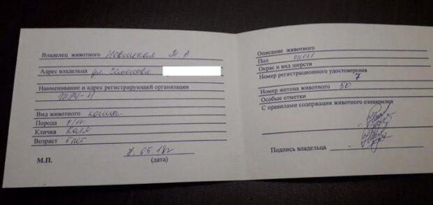 Паспорт накошку Катю