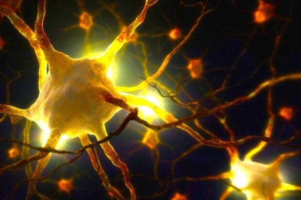 Биоразлагаемые микрокапсулы доставят фактор роста нервов для регенерации нейронов