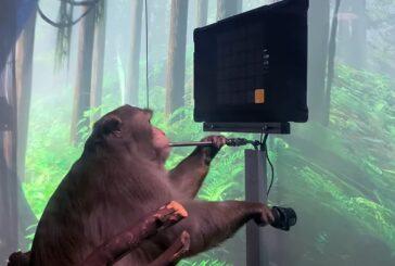 Играющая «силой мысли» обезьяна