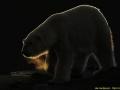 0006-wildlife-3-tillymeijer